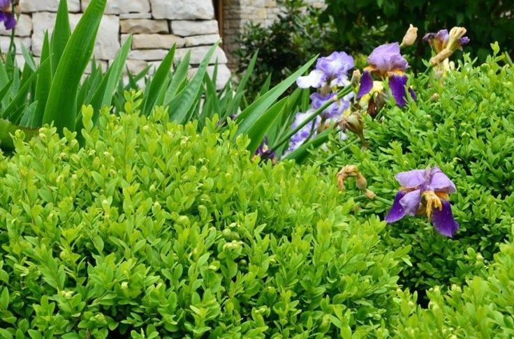 Nasz piękny ogród :) // Our beautiful #garden