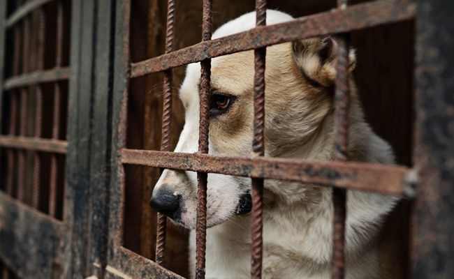 80 Dogs Who Were Rescued From A Dog Meat Farm Are About To Start New Lives