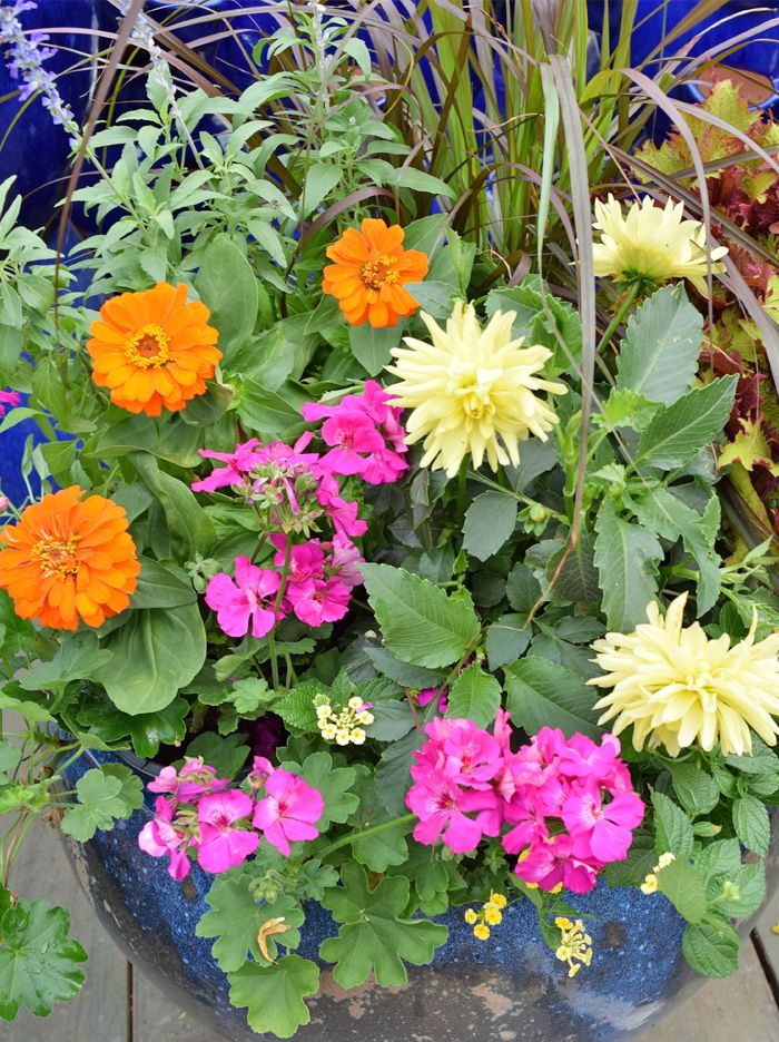 70 best images about Container Gardening on Pinterest