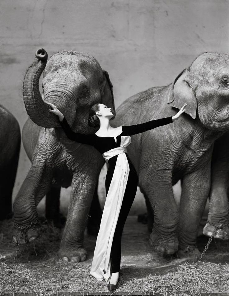 Dovima with Elephants 1955 | From a unique collection of figurative photography at https://www.1stdibs.com/art/photography/figurative-photography/
