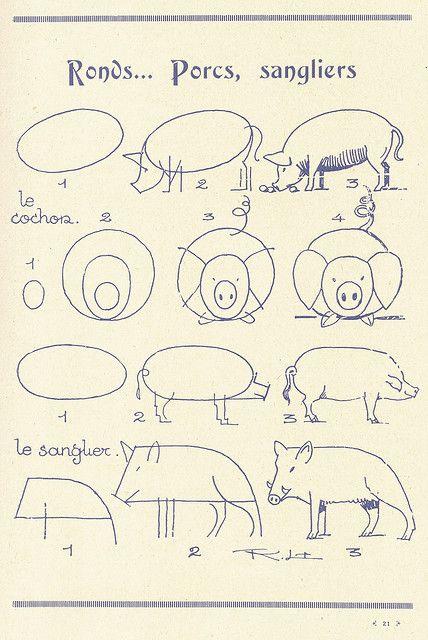 ronds...porcs, sangliers