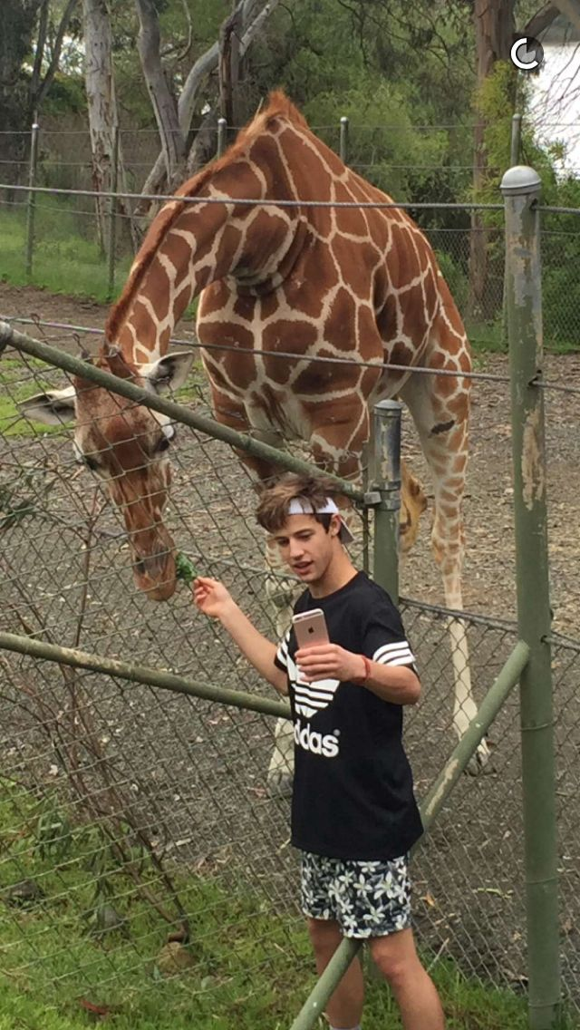 Me and my friend went to the zoo and took a picture just like this one, I have Cameron on snapchat so I sent him the picture XD