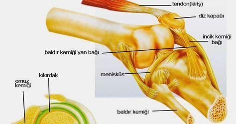 Kemik ve Eklem Temizliği Kemik ve Eklem Temizliği Nasıl Yapılır ? Eklem Temizliği,Eklem Temizliği Nasıl Yapılır,Kemik Temizliği,Kem...