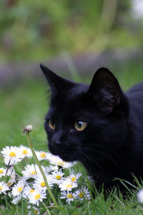 En el jardín...