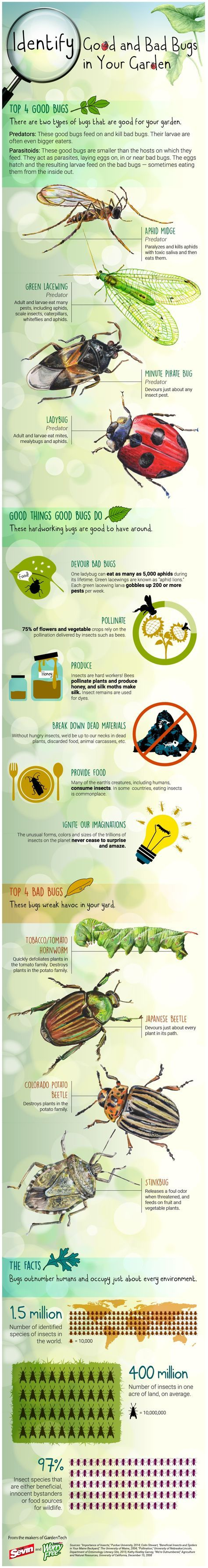 Identifying Good and Bad Bugs in Your Garden (Infographic)