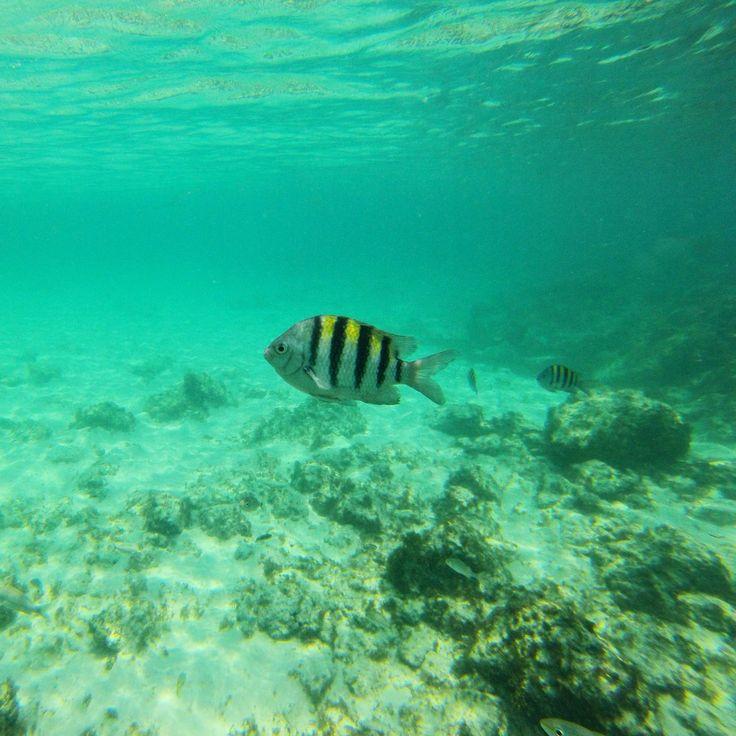 Caribe mar peces buceo aruba oceano agua