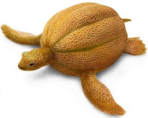 Turtle fruit sculpture (from cantaloupe)
