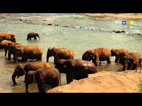 Sri Lanka Impressionen - Vivamundo Reisen  Mehr Informationen zu unseren Sri Lanka Reisen finden Sie hier: https://www.vivamundo-reisen.de/Asien/SriLanka/  Lassen Sie sich Ihre persönliche Sri Lanka Traumreise vom Sri Lanka Spezialisten Vivamundo Reisen zusammenstellen