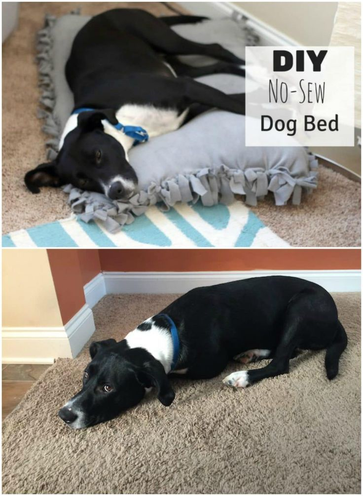 Diy No Sew Dog Bed For Under 10 Puppies Funny Dogs Puppy Supplies