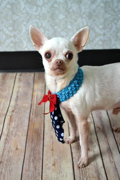 Adopt Jake Diamond Dog 75 Adoption Fee On With Images Dog Adoption Pet Adoption Cute Animals