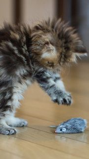 Funny Kitten Playing With Toy Mouse