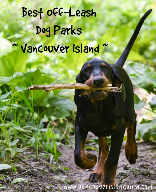 If you want your dog to get a little more exercise, check out these fantastic off-leash dog parks and trails in the Mid-Vancouver Island area.