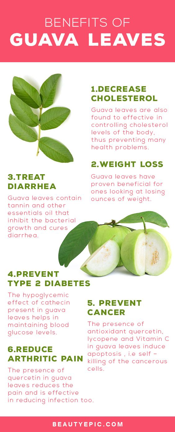 20 Benefits and Medicinal Uses of Guava Leaves You Never Knew