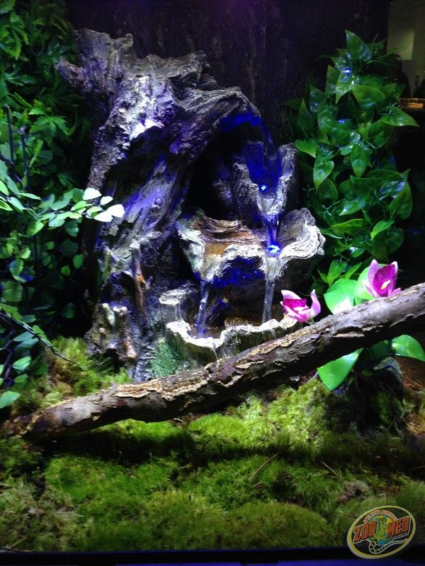 36 Best Terrarium D 233 Cor Images On Pinterest Reptiles