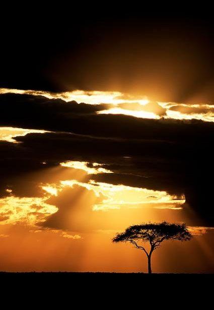 Acacia tree at sunset in South Africa