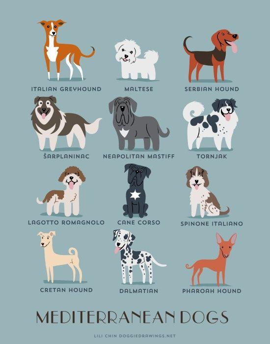 Impresión del arte Mediterráneo perros (razas de perros de los países mediterráneos)