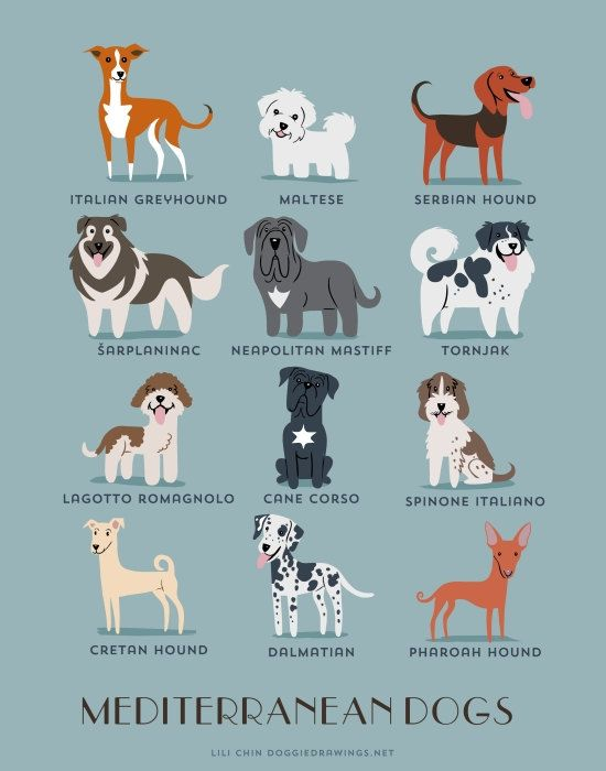 Dog Breeds print: MEDITERRANEAN DOGS art print (dog breeds from Mediterranean countries)