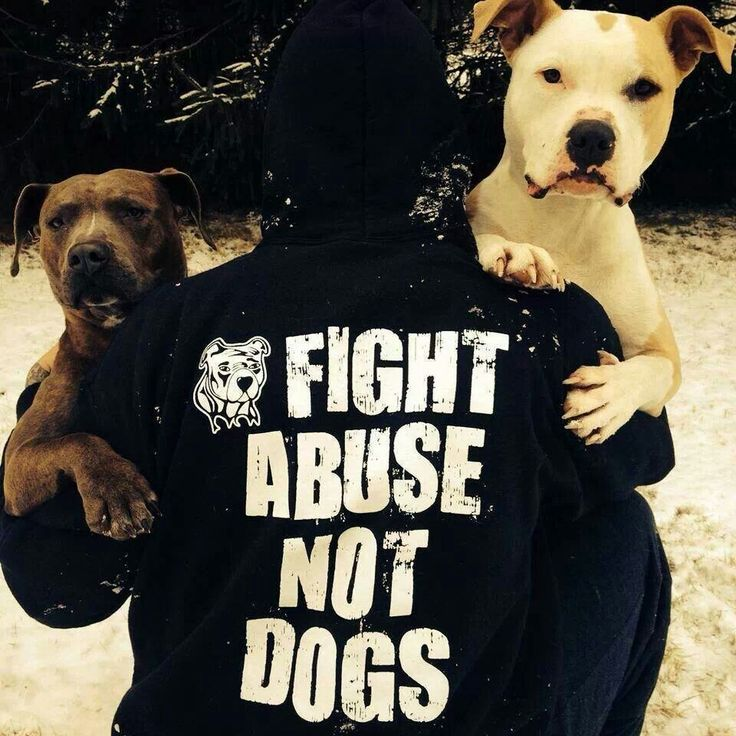 Fight abuse not dogs