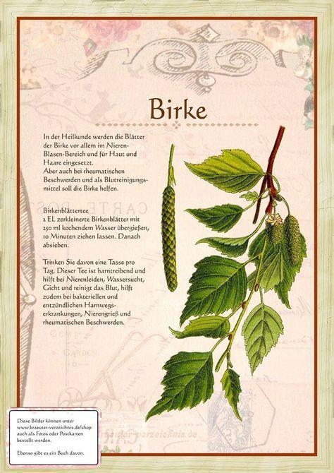 Birke http://www.kraeuter-verzeichnis.de/