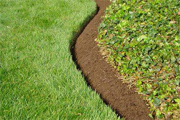 Край газона. #газон #lawn