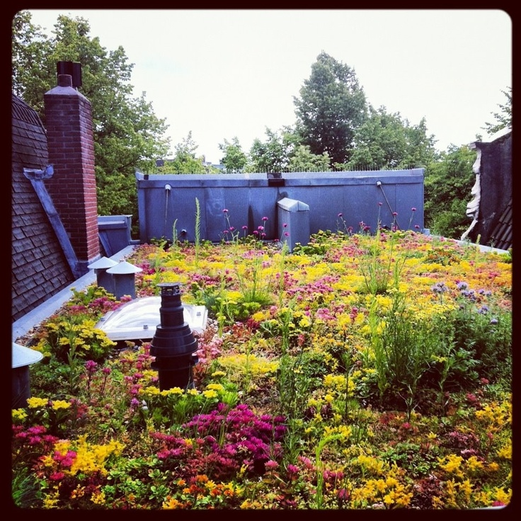 Dakdokters dragen bij aan meer bloeiende daken