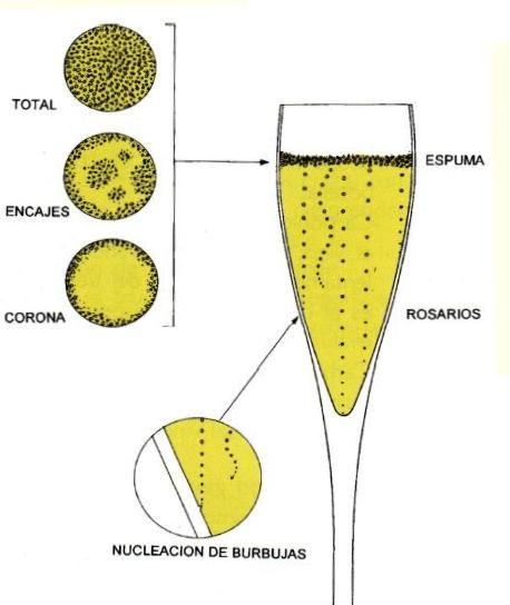 de Uvas a Vinos: La elaboración del vino espumoso, tipos y cata.