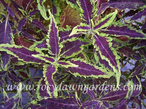 ideas about Plant Catalogs on Pinterest Companion planting
