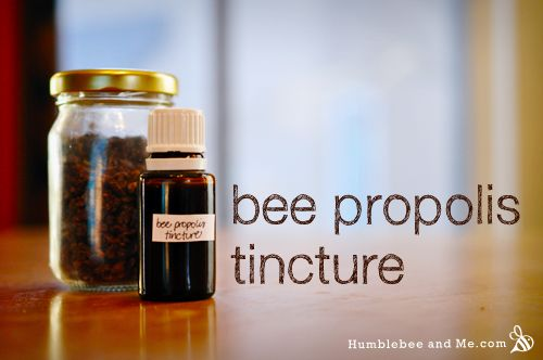 Bee Propolis Tincture by Marie Posted on January 17, 2014  Bee propolis is a wonderful ingredient for your DIY body products, especially...