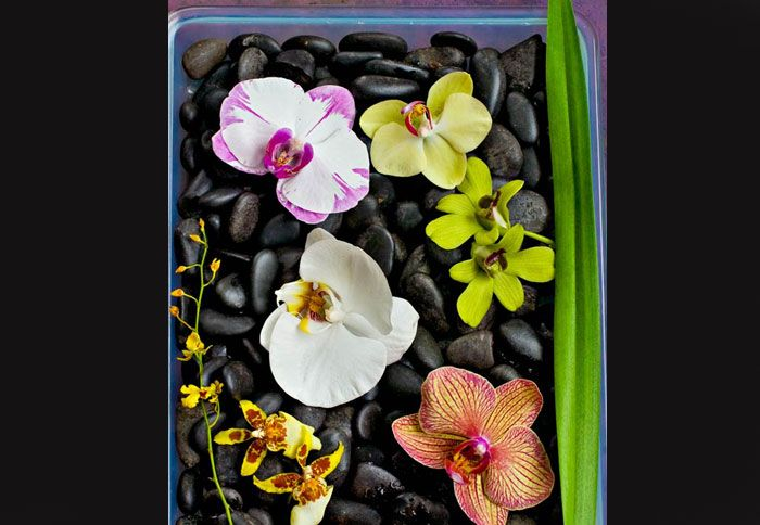 Mixed orchids in a tray. So Beautiful!