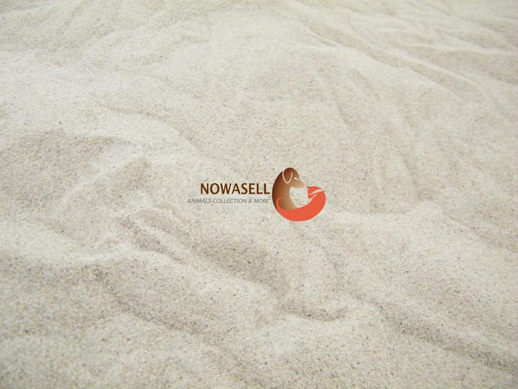1000 images about kies sand steine on pinterest. Black Bedroom Furniture Sets. Home Design Ideas