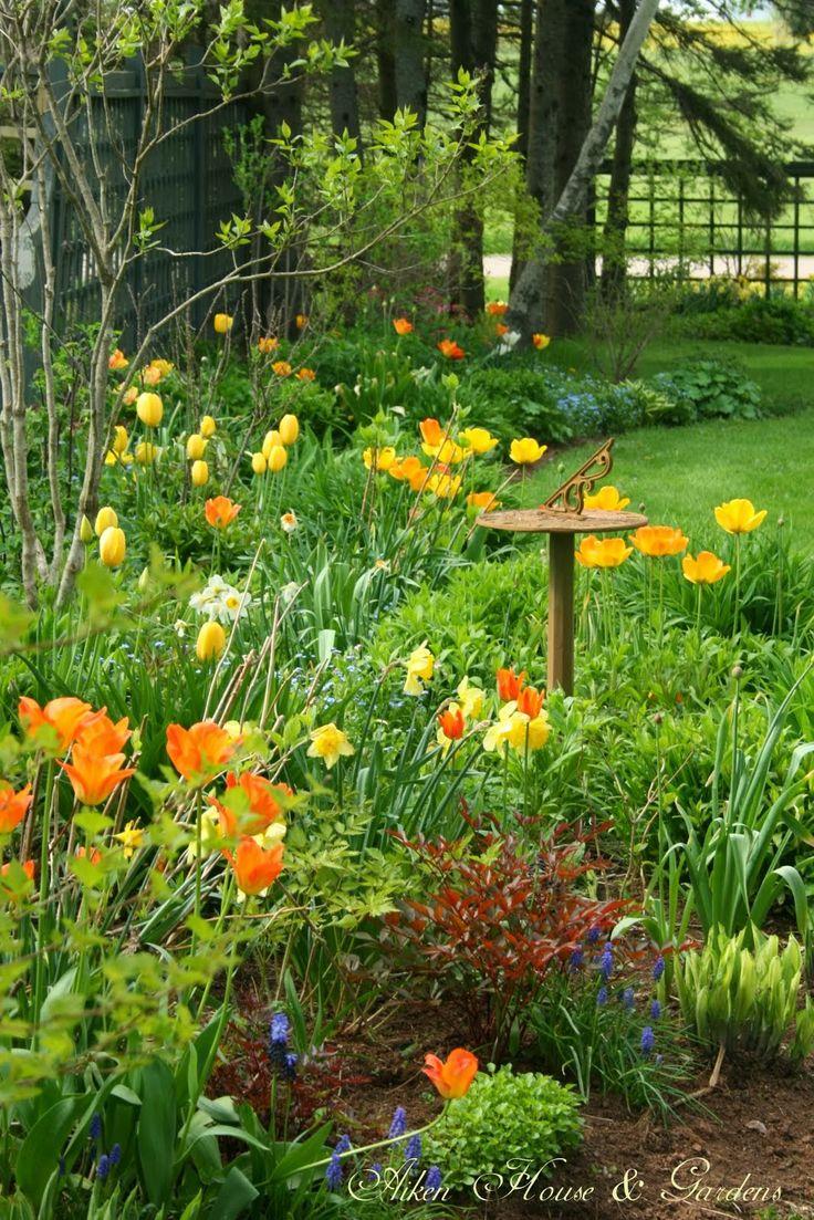 Backyard Tulip Garden