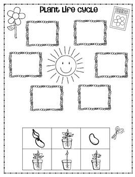Plant...Life Cycle Freebie! by 1st Grade Hip Hip Hooray