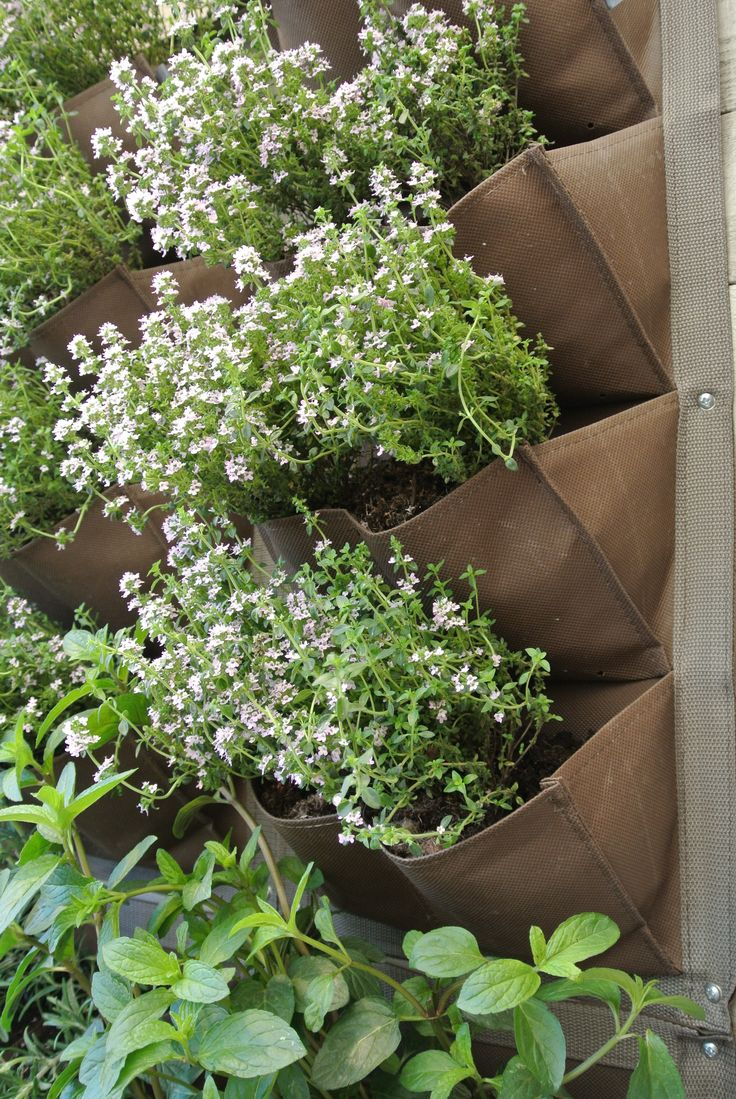 1000 Images About Indoor Gardening On Pinterest Herbs