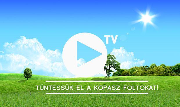 gyep, fű, pázsit, kerti teendő  #kert.tv