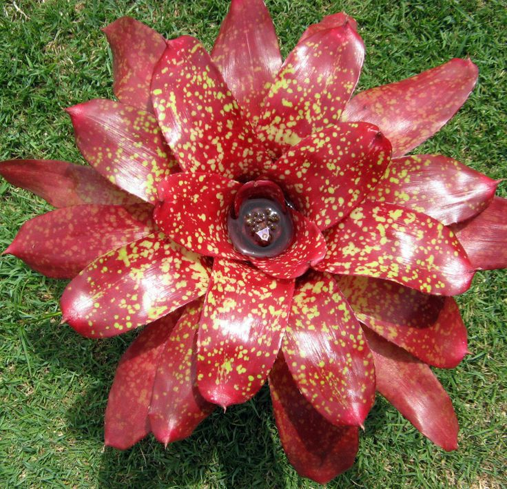 how to grow bromiliads indoors