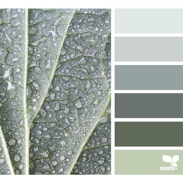 design seeds | search | for all who ♥ color ❤ liked on Polyvore featuring backgrounds, colors and palette