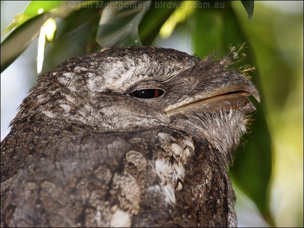 alaska birding groups