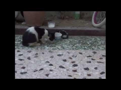 little kitten and big kitten - YouTube