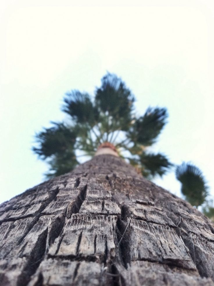 Arizona palm | VSCO Cam