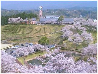 Flower spot of Oita spring | 旬の情報 | Oita Prefecture's Official Sightseeing Information Site