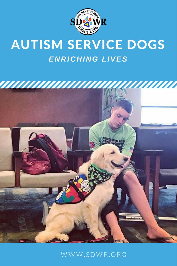 Our Autism Service Dogs are trained to provide support for families who are coping with the challenges of having an Autistic child. With hundreds of lives touched by our Autism Dogs, there is no question that our service dogs work to make a difference. No age limits, no location restrictions. Our trainers travel to you.