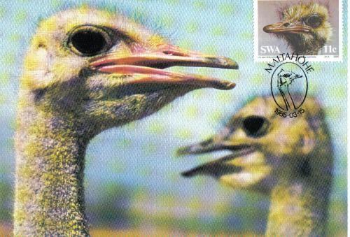 Ostrich maximum card sent to the USA.