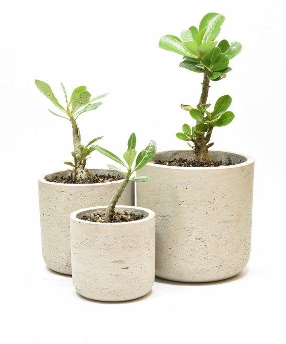 Concrete Pots For Plants Pots For Succulents Concrete Plant Pots