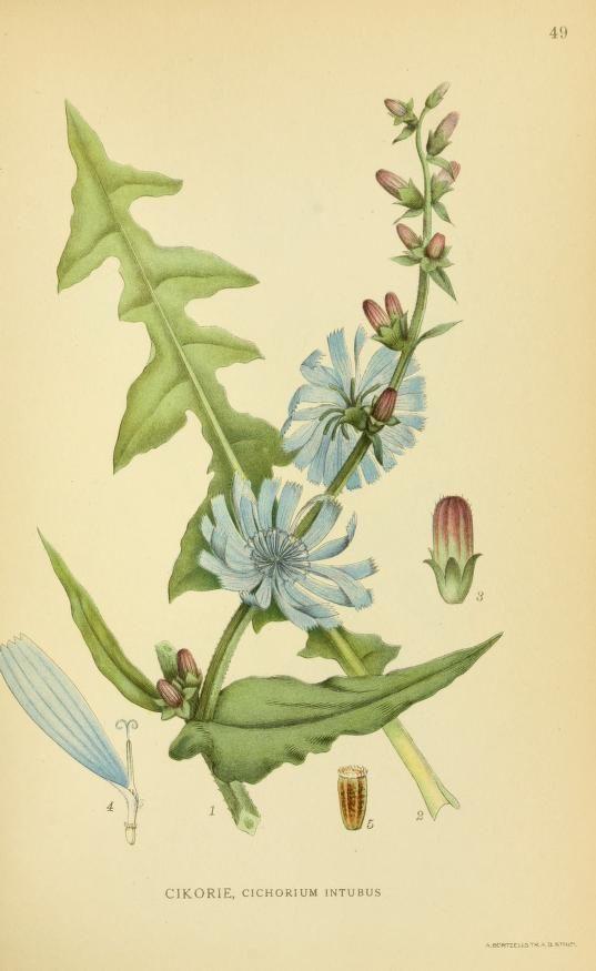 1 - Billeder af nordens flora, - Biodiversity Heritage Library