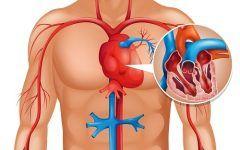 Os 14 Sintomas que Indicam a Má Circulação Sanguínea