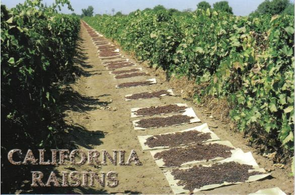 san joaquin valley - Google Search.. o my this is hard work Farmworkers