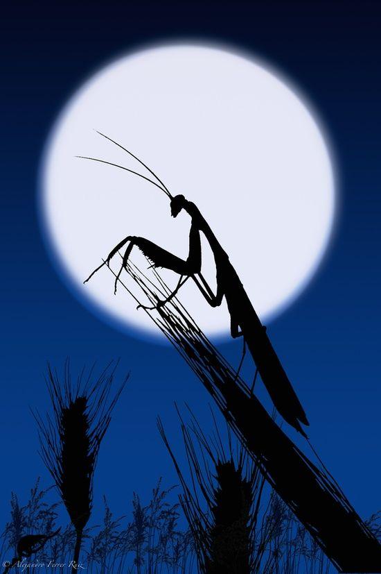 how to make a praying mantis trap