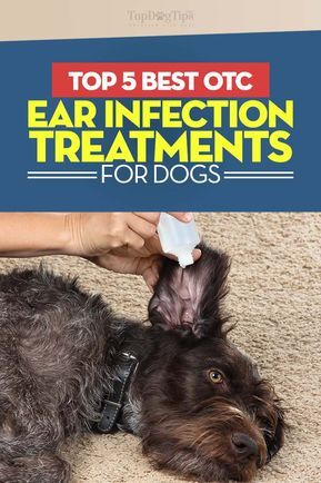 Top 5 Best Dog Ear Infection Treatment in 2018 (Over the Counter)