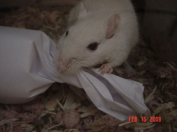 Picture of easy to make Gerbil toy. Several easy ones.