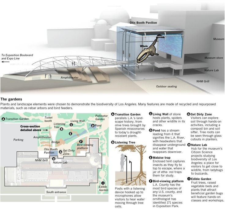 Interactive graphic: A revived L.A. County Natural History Museum - Data Desk - Los Angeles Times
